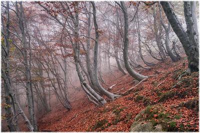 Nebbia tra le ultime foglie